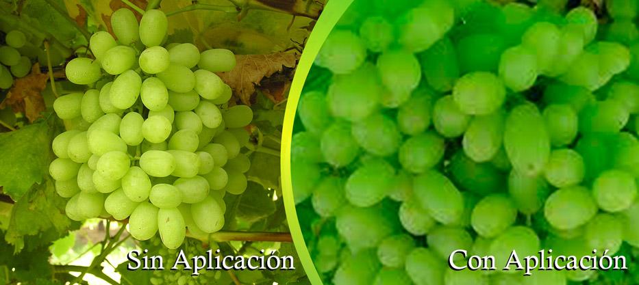 2048-x-915-px-uva-verde1