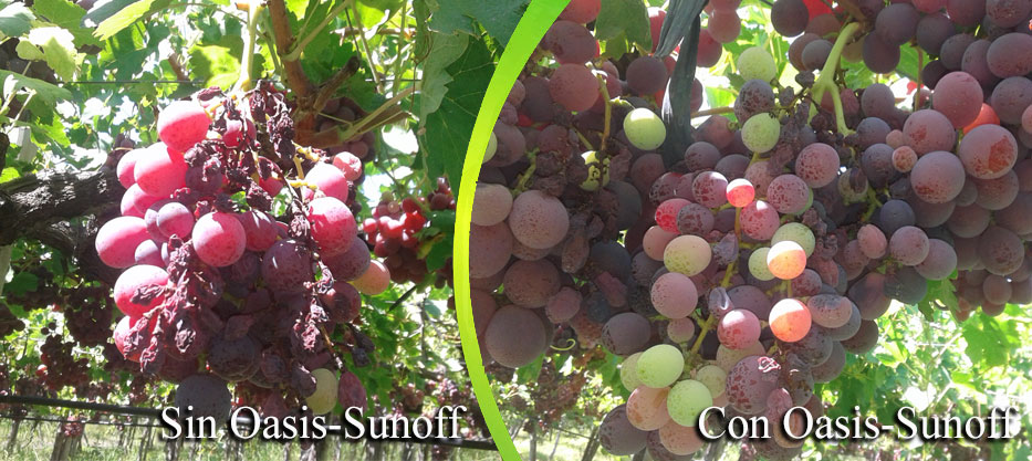 sin-con-oasis-sunoff2