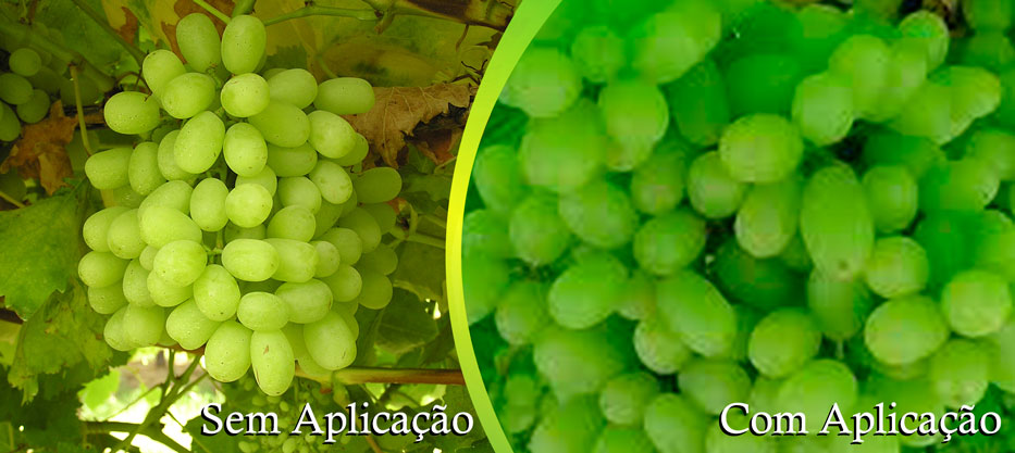 uva-verde