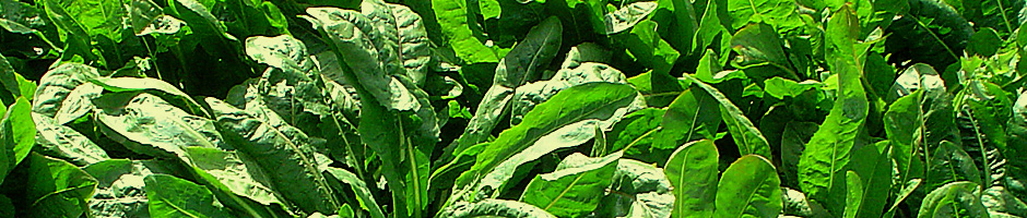 presentacion-hortalizas